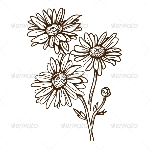 Camomile Flower - Flowers & Plants Nature