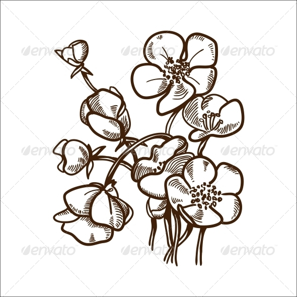Daisy Flower - Flowers & Plants Nature