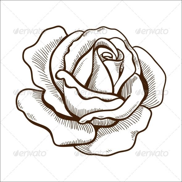 Rose Flower - Flowers & Plants Nature