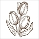 Tulip Flower - GraphicRiver Item for Sale
