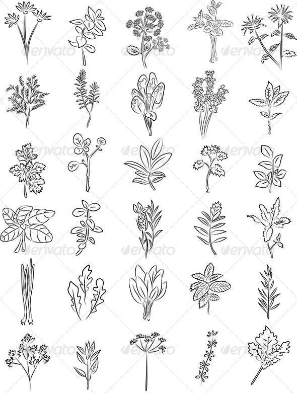 Herbs Vector - Flowers & Plants Nature
