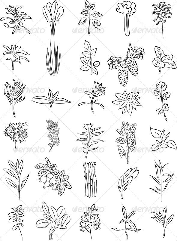 Herbs Vector - Flowers & Plants Nature