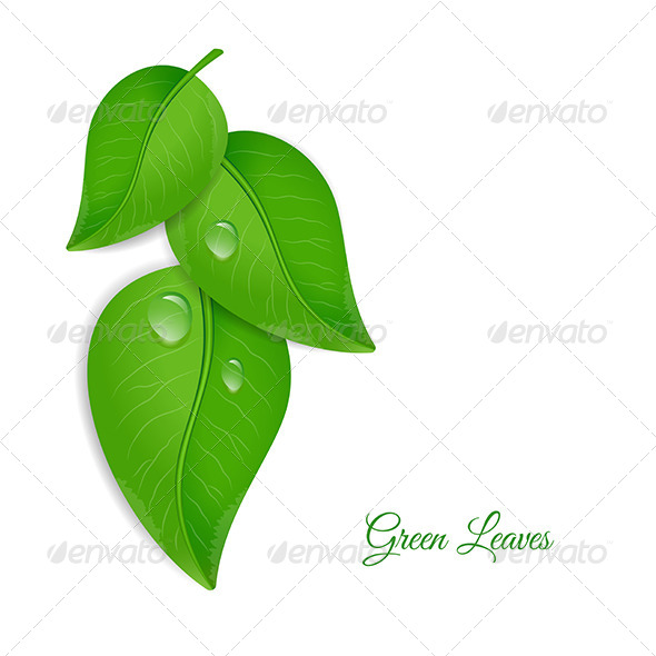 Green Leaves with Water Drops - Nature Conceptual