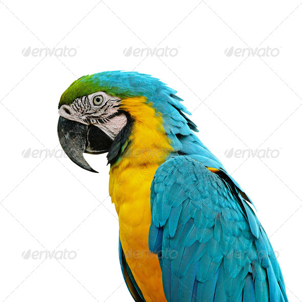 Blue and Gold Macaw - Stock Photo - Images