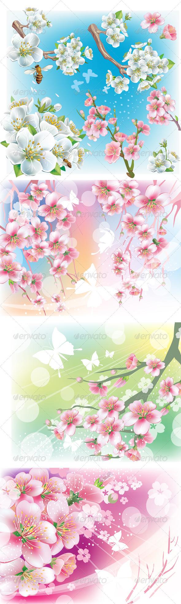 Cherry Blossom  - Flowers & Plants Nature