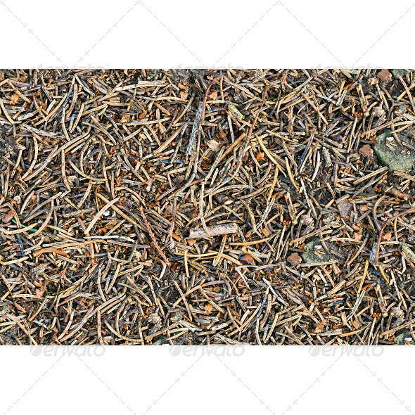 Tileable Forest Ground - Pine Needles Texture - Nature Textures