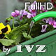 Watering Flowers - VideoHive Item for Sale