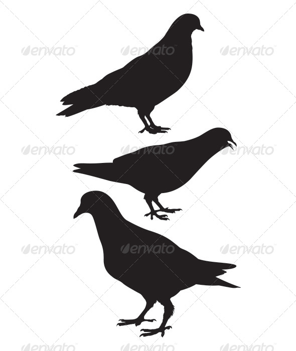 Pigeon. Silhouette - Animals Characters