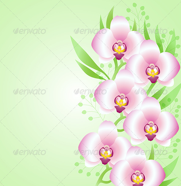 Green Background with Orchids - Flowers & Plants Nature