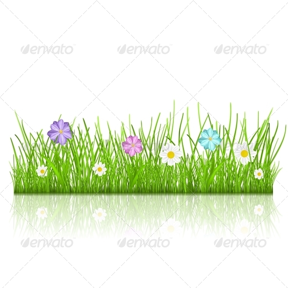 Grass with Flowers - Flowers & Plants Nature