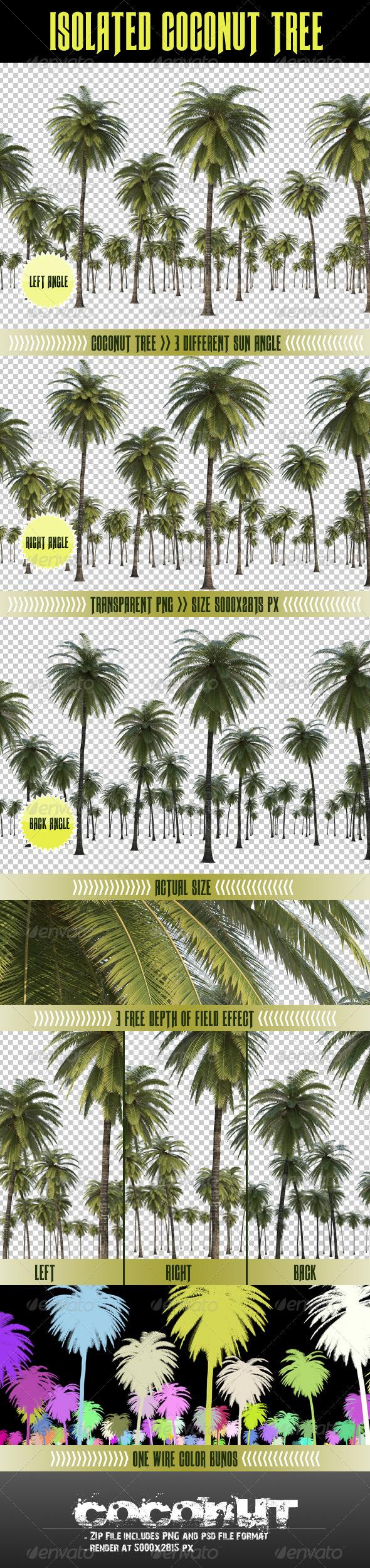 Coconut Tree - Miscellaneous 3D Renders