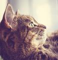 Cat - PhotoDune Item for Sale