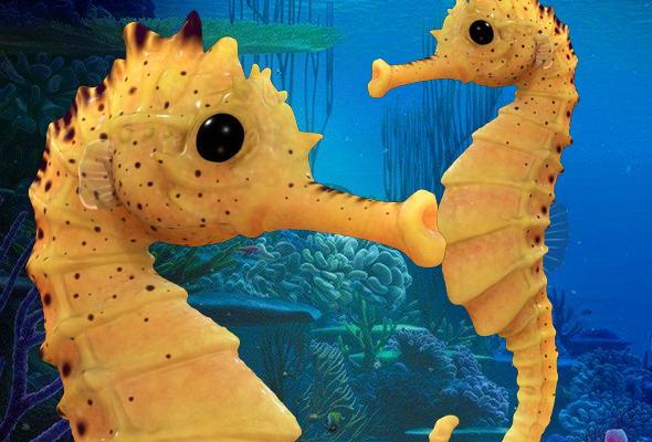 Seahorse - 3DOcean Item for Sale