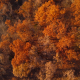 Aerial Over Autumn Fall Trees - VideoHive Item for Sale