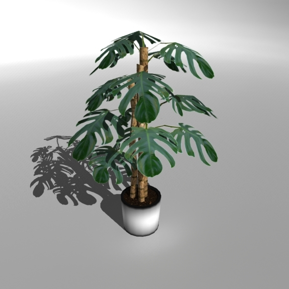 "Low-poly Plant ""Philodendron Deliciosa"" - 3DOcean Item for Sale"