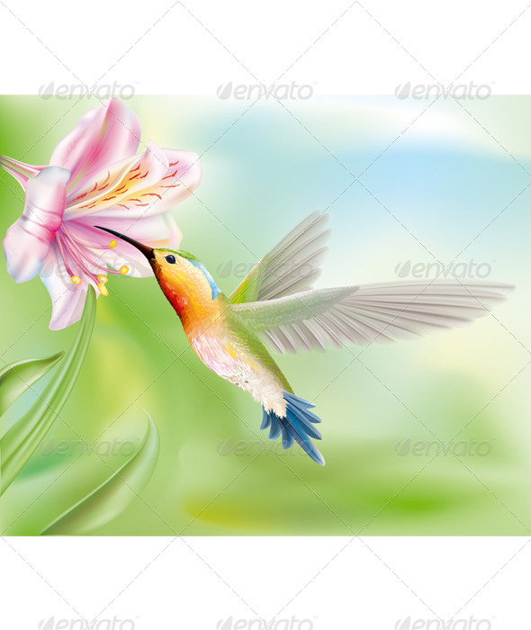 Hummingbird in the Flower - Animals Characters