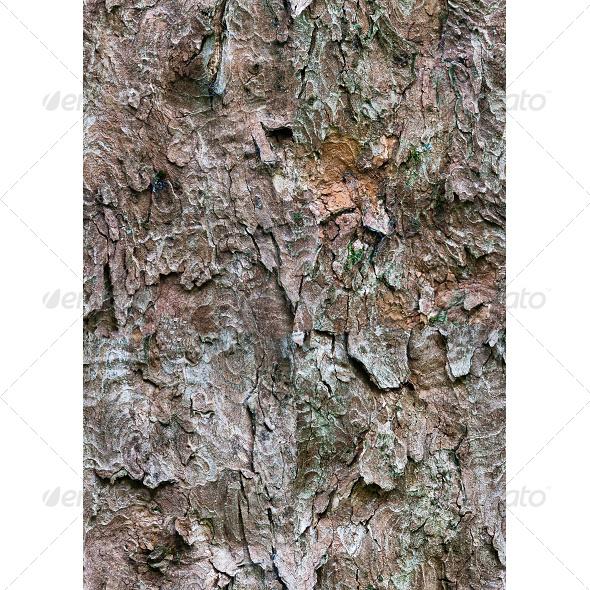 Tileable Bark Tree Texture - Wood Textures