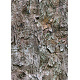 Tileable Bark Tree Texture - GraphicRiver Item for Sale