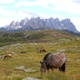 Mountain wild horse  - VideoHive Item for Sale
