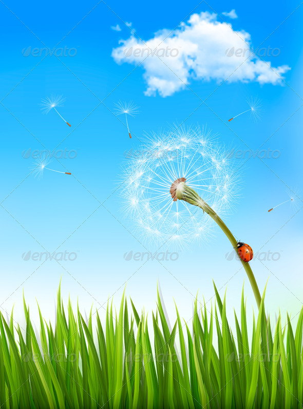 Nature Background with a Dandelion and a Ladybug - Flowers & Plants Nature
