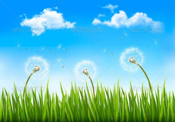Nature Background with Dandelions - Flowers & Plants Nature