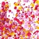 Flowers Transition Pack - VideoHive Item for Sale