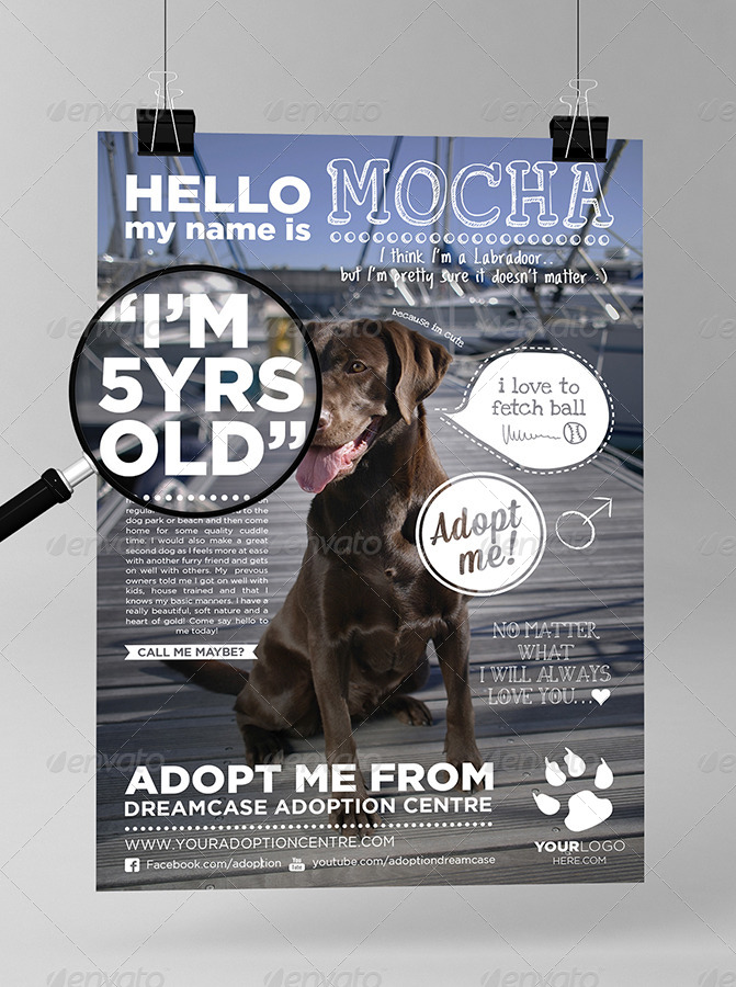 Animals Adopt Me Flyer By Dreamcase Graphicriver
