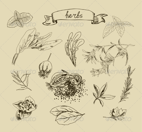 Herb Sketches - Food Objects