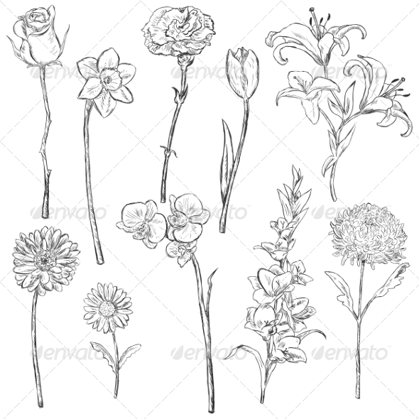 Vector Set of Sketch Flowers - Flowers & Plants Nature