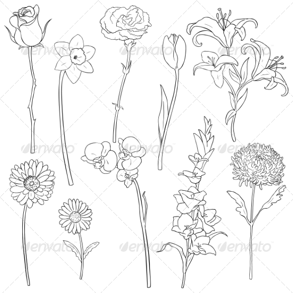 Vector Set of Outline Flowers - Flowers & Plants Nature