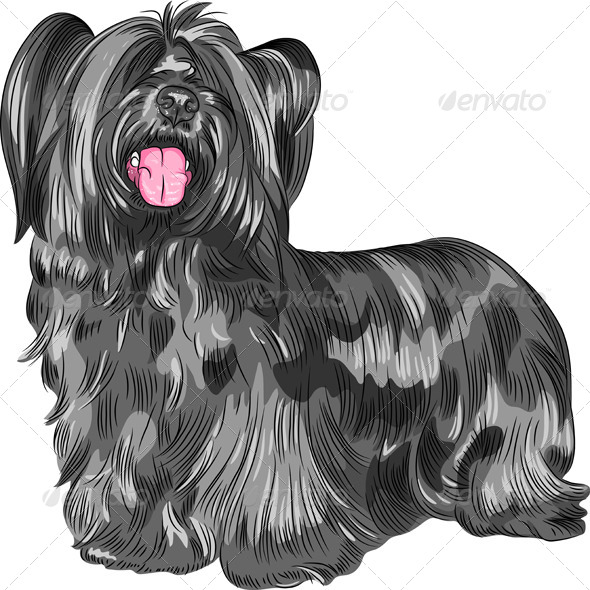 Funny shaggy smiling dog Skye Terrier  breed - Animals Characters
