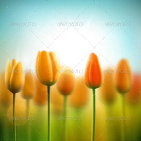 Spring Background with Tulips - Flowers & Plants Nature