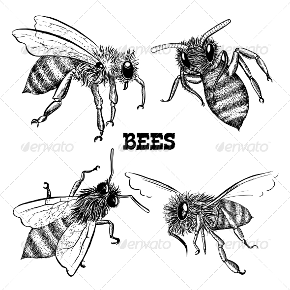 Collections of Honey Bee Icons - Animals Characters