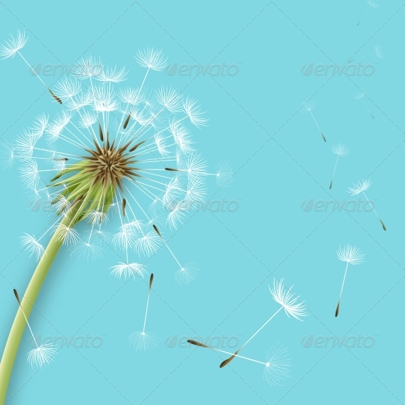 White Dandelion - Flowers & Plants Nature