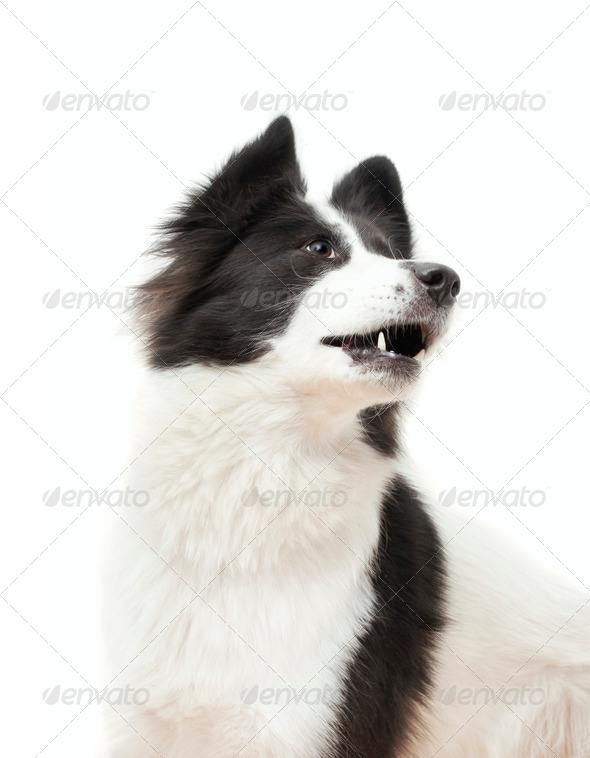 The Dog - Stock Photo - Images