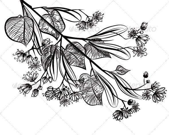 Linden - Nature Conceptual
