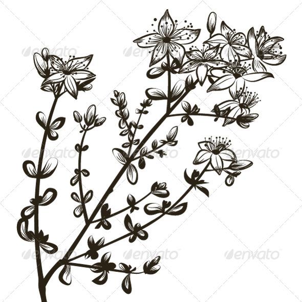 St Johns Wort - Flowers & Plants Nature
