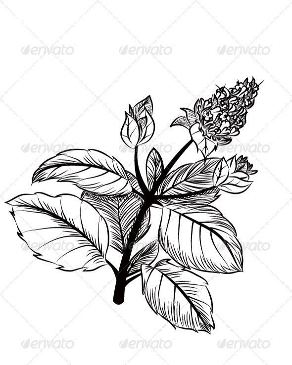 Peppermint - Flowers & Plants Nature