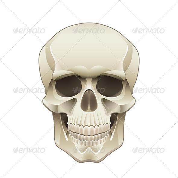 Human Skull - People Characters