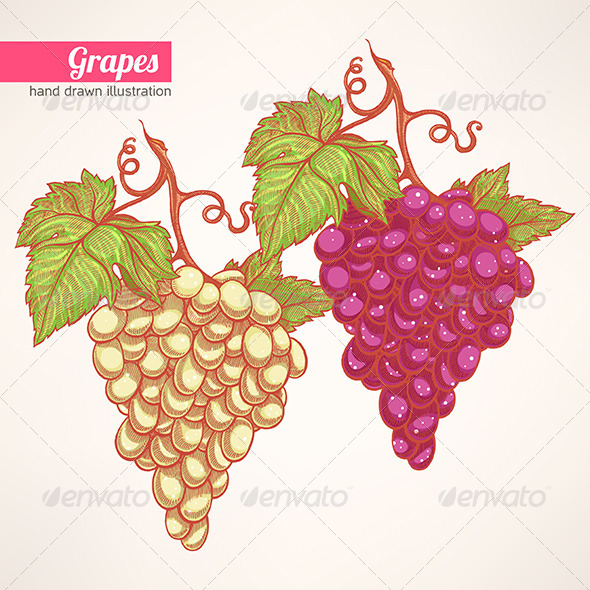 Bunches of Grapes - Flowers & Plants Nature
