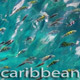 Fishes In Caribbean Sea - VideoHive Item for Sale