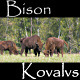 Bison - VideoHive Item for Sale