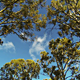 Looking up while Driving from Road with Trees - VideoHive Item for Sale