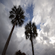 Palm Tree Storm Approaching - VideoHive Item for Sale