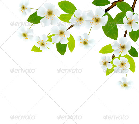 Nature Background with Blossoming Tree Brunch - Flowers & Plants Nature