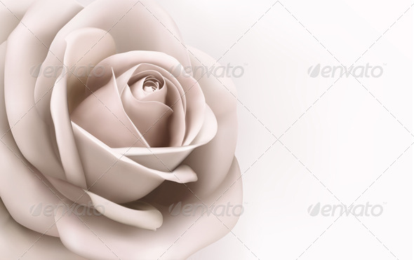 Rose Background - Flowers & Plants Nature