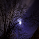 Cloudy Tree Night - VideoHive Item for Sale