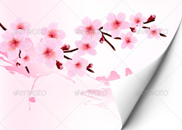 Spring Background with a Blossoming Sakura Branch - Flowers & Plants Nature