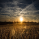 Golden Sky - VideoHive Item for Sale
