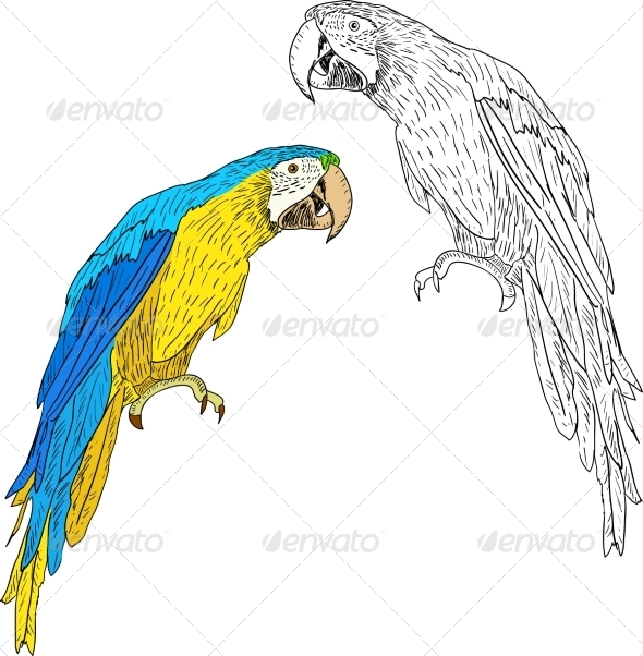 Parrot - Animals Characters